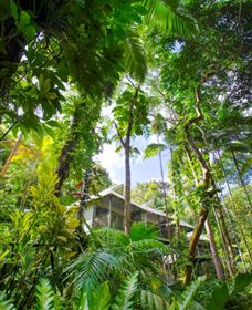 Daintree Eco Lodge and Spa - Australia Accommodation