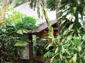 Heritage Lodge and Spa - In the Daintree - Australia Accommodation