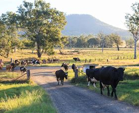 Tommerups Dairy Farmstay - Australia Accommodation