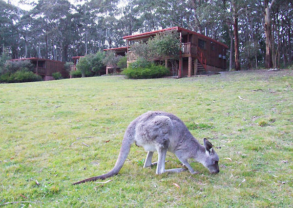 Jenolan Caves Cottages - Australia Accommodation