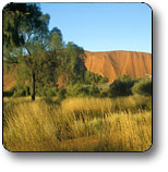 Uluru - Kata Tjuta National Park - Australia Accommodation