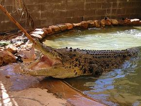 Wyndham Zoological Gardens and Crocodile Park - Australia Accommodation