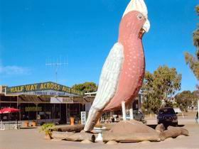 The Big Galah - Australia Accommodation