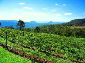 Preston Peak Wines - Australia Accommodation