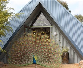 Halls Gap Zoo - Australia Accommodation