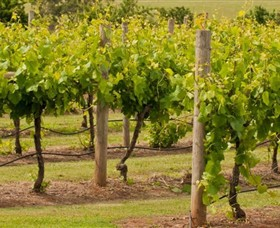 Mt Coghill Vineyard - Australia Accommodation