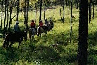 Hunter Valley Horse Riding and Adventures - Australia Accommodation