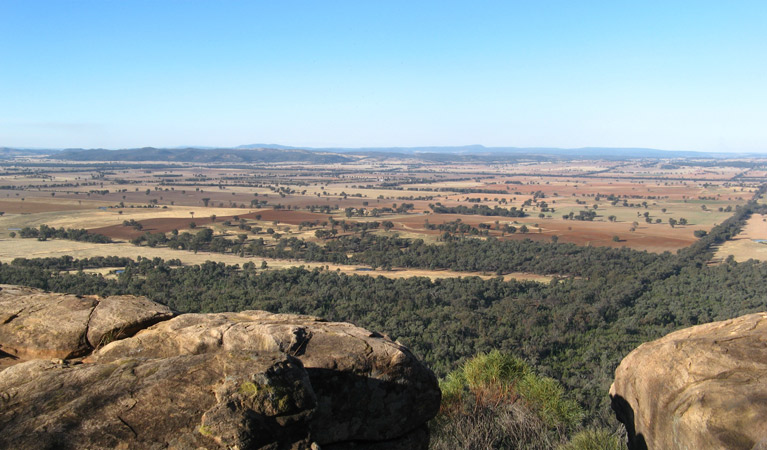 Basin Gully to Eualdrie lookout track - Australia Accommodation