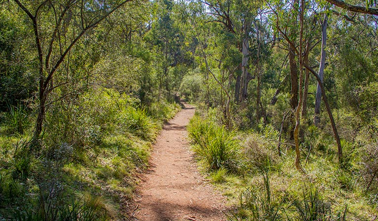 Mares Forest Creek walking track - Australia Accommodation
