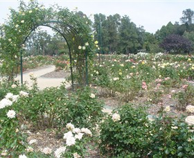 Victoria Park Rose Garden - Australia Accommodation
