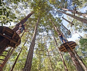 TreeTop Adventure Park Central Coast - Australia Accommodation