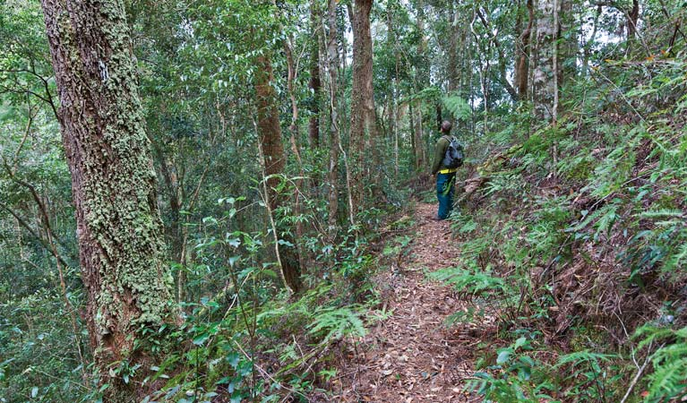 Blackbutt walking track - Australia Accommodation