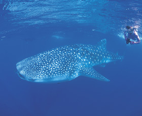 Ningaloo Reef - Australia Accommodation