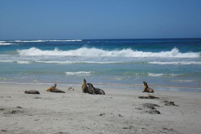 Kangaroo Island in a Day Tour from Adelaide - Australia Accommodation