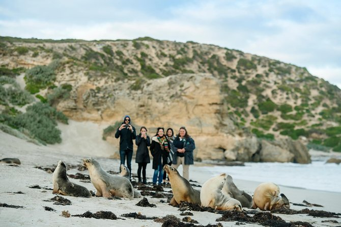 Small-Group Kangaroo Island 4WD Tour from Adelaide - Australia Accommodation