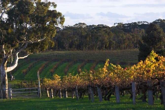 Barossa Valley with Hahndorf Tour from Adelaide - Australia Accommodation