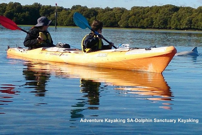 Dolphin Sanctuary and Ships Graveyard Kayak Tour - Australia Accommodation