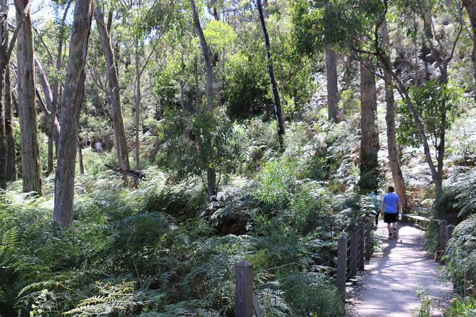 Self-Guided Waterfall Gully to Mount Lofty Hike from Adelaide - Australia Accommodation