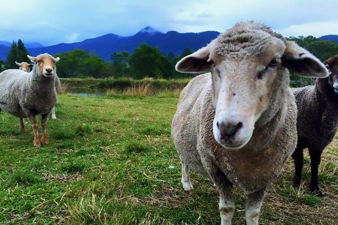 Trevena Glen Farm Animal Experience - Australia Accommodation