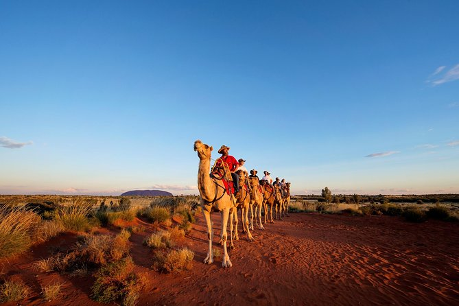 Uluru Camel Express Sunrise or Sunset Tours - Australia Accommodation
