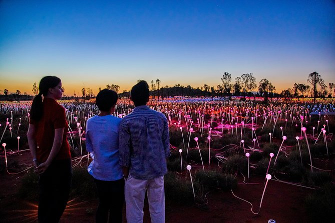 Uluru Field of Light Sunrise Tour - Australia Accommodation