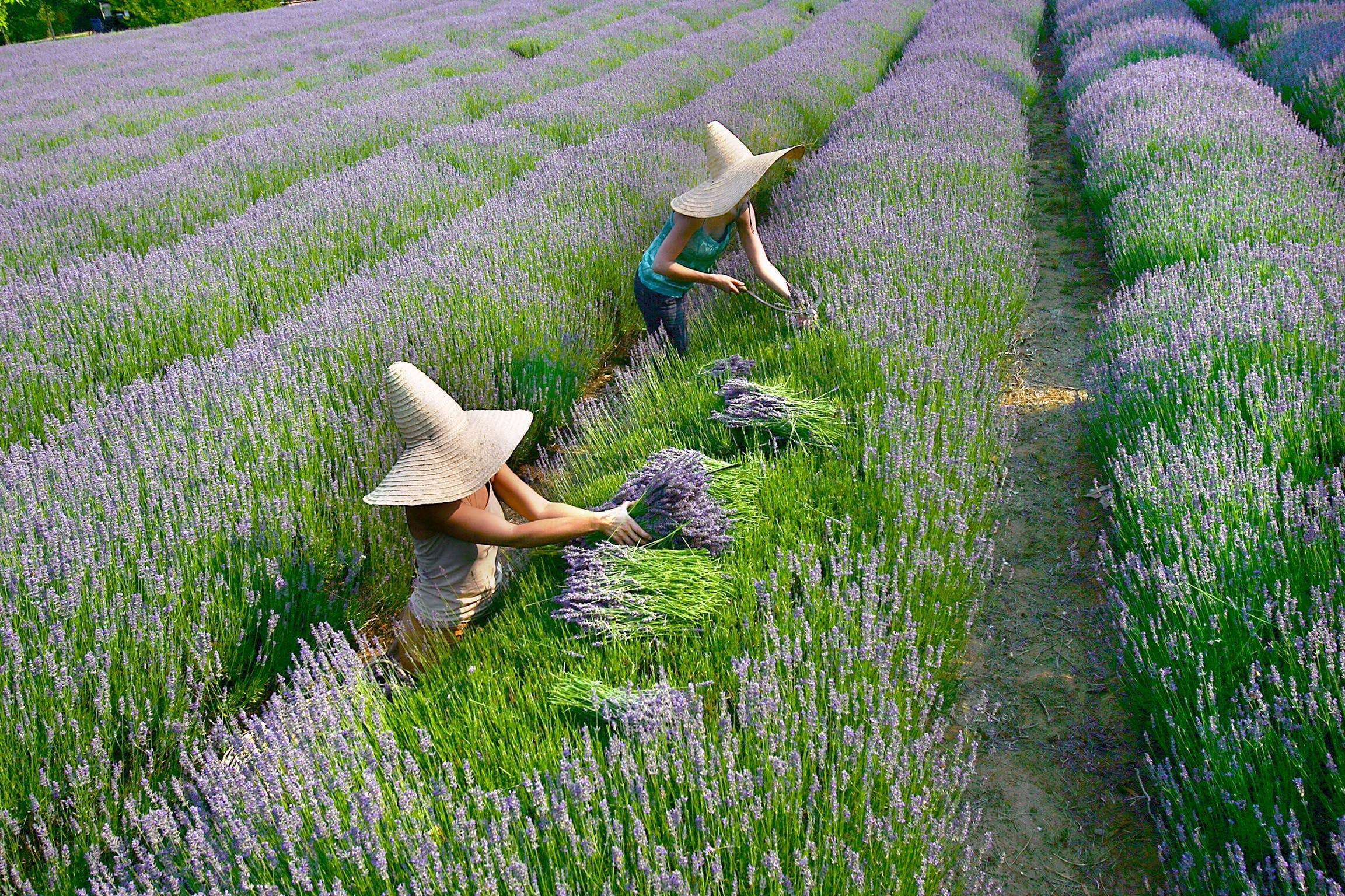 Lavandula Swiss Italian Farm - Australia Accommodation