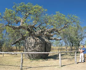 Boab Prison Tree - Australia Accommodation