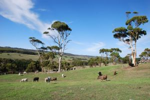 Lisieux Farm Bed and Breakfast - Australia Accommodation